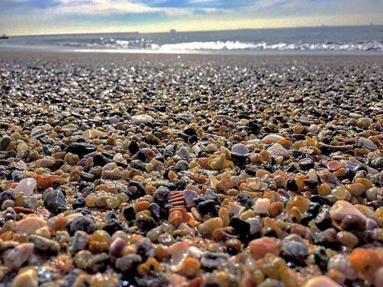 cropped-shells.jpg